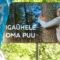 Alexela: засадим лесом территорию, равную площади острова Прангли