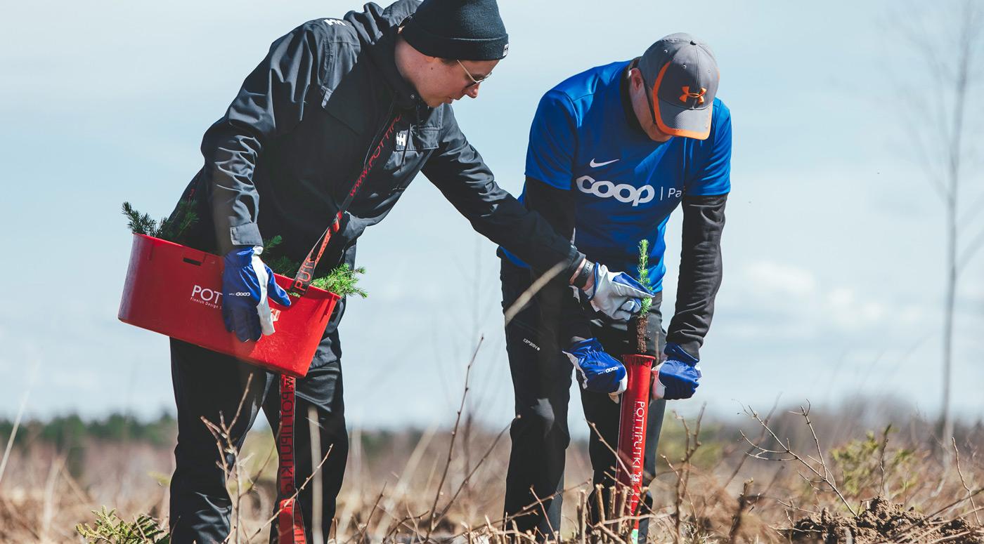 Coop Pank посадил 2500 елей от имени эстонских «газелей»