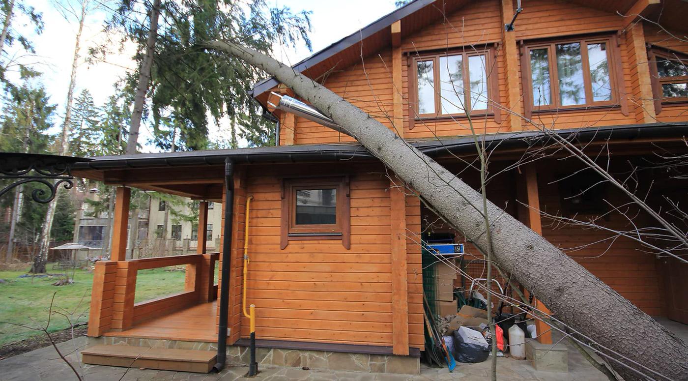 PZU: в преддверии осенних штормов проверьте состояние больших деревьев рядом с недвижимостью