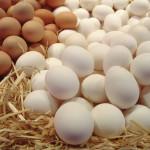 Исследование: способ содержания кур практически не влияет на пищевую ценность яиц