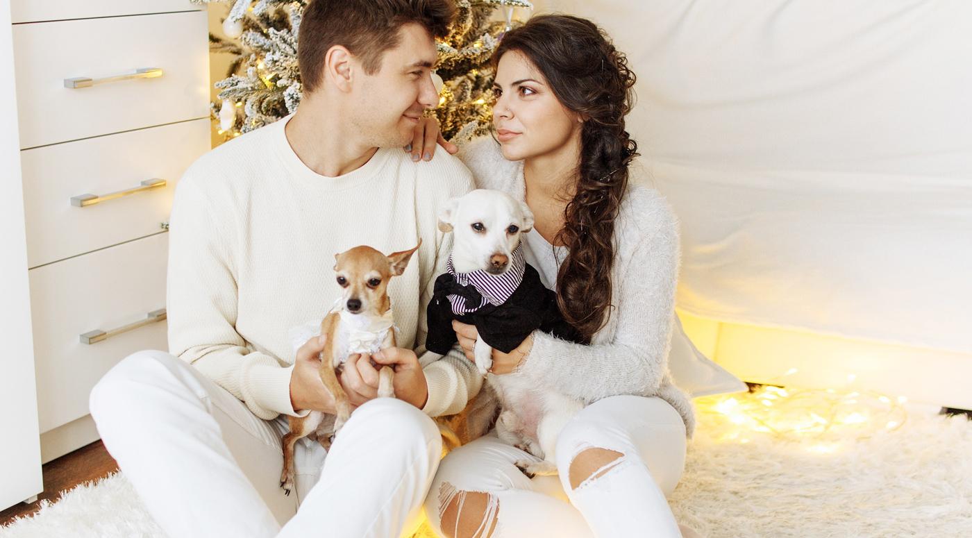 Поиск подходящего арендного жилья: 4 совета владельцам домашних животных