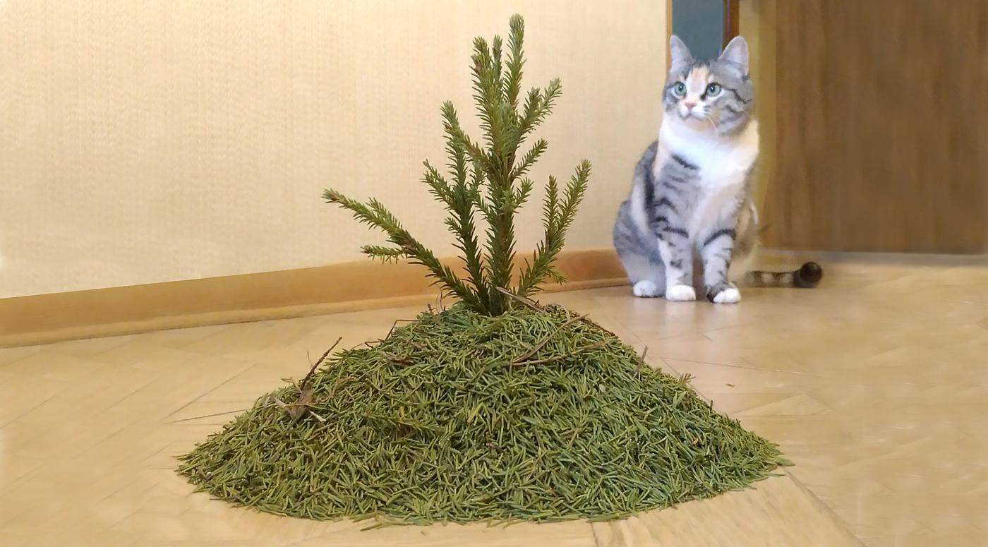 Куда таллиннцы могут  отнести рождественские елки?
